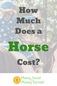 how much does a horse cost